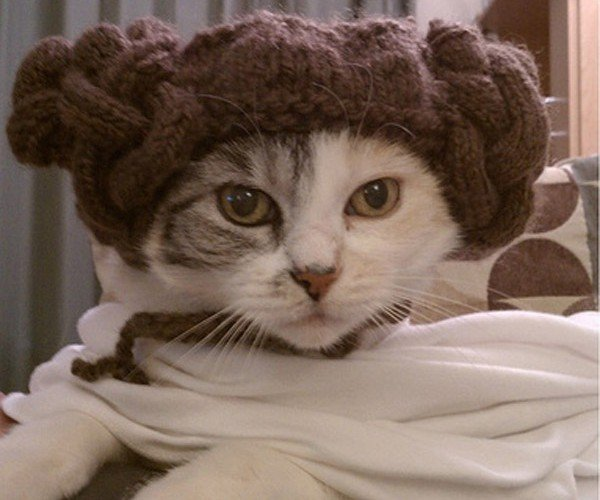 Princess Leia: Cat Edition