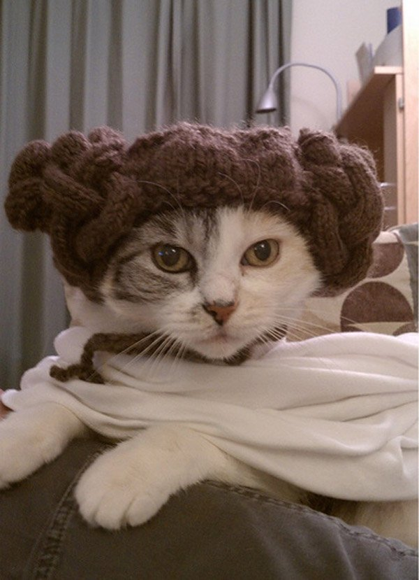 princess_leia_kitty_by_jennifer_kumpf