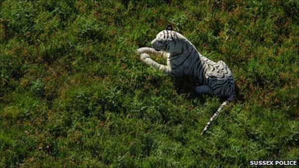 tiger tb
