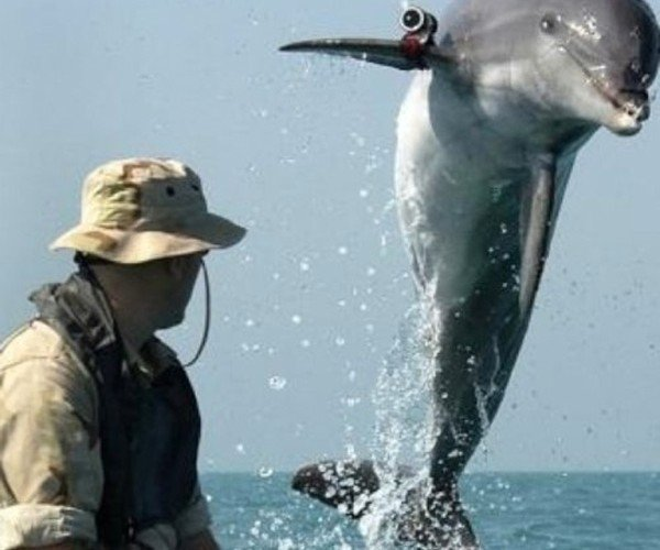 Dolphin Soldiers: Right Out of Cyberpunk
