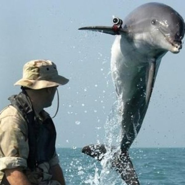 dolphin soldiers us navy mammal marine corps mines science-fiction