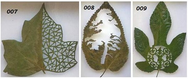 leaf art maple