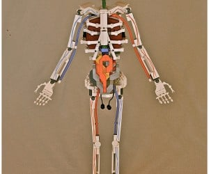 LEGO Skeleton: Bricks for Bones