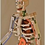 lego skeleton by clay morrow aka choking hazards 8