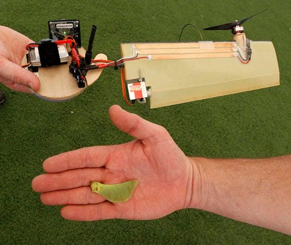 maple drone