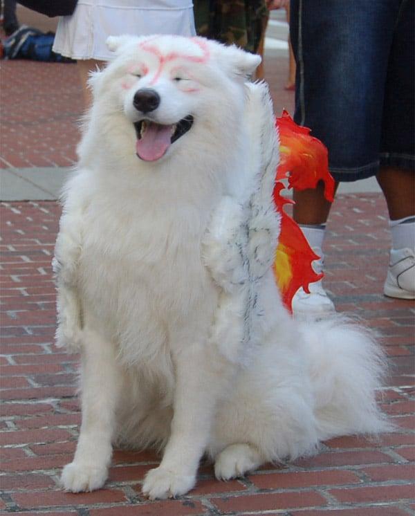 okami_amaterasu_dog_cosplay_3