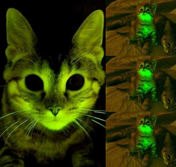 glowing_cats