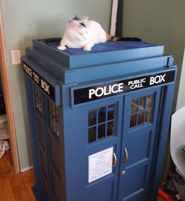 tardis cat fort 1