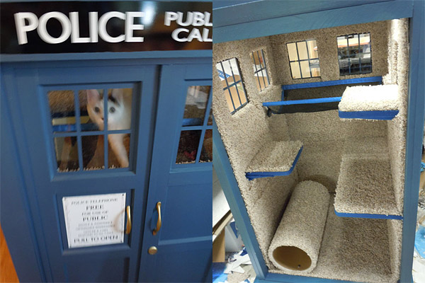 tardis cat fort 2