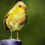 100911 rg AngryBirdsIRL 03 150x150