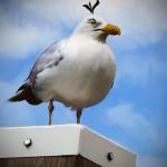 100911 rg AngryBirdsIRL 05 150x150