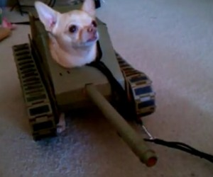 Doggy Tank Costume Sure to Drop Land Mines