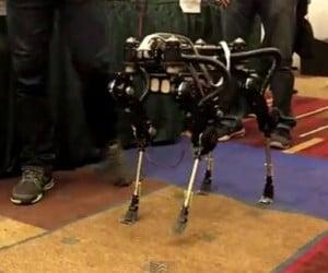 South Korean Quadruped Robot Dog Goes for a Walk