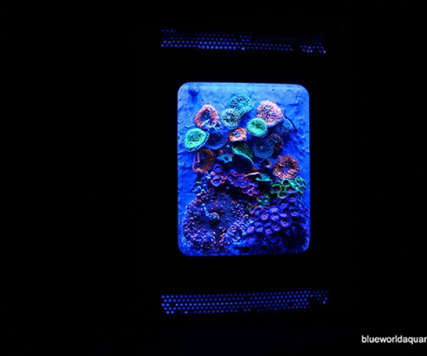 xbox 360 aquarium by blue world aquariums 4