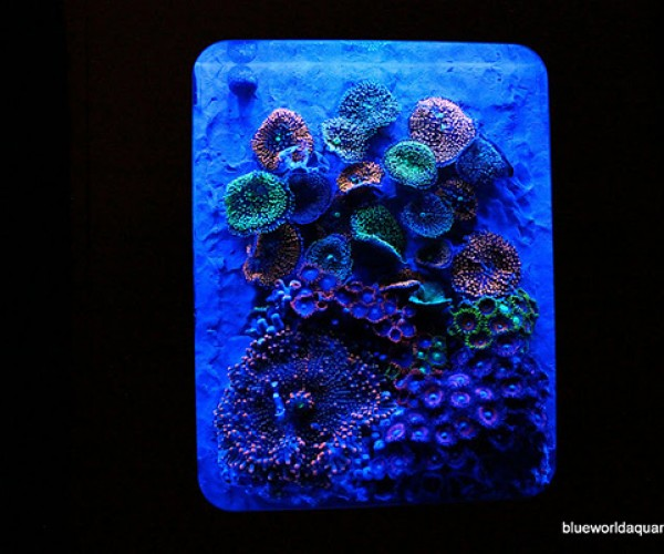 xbox 360 aquarium by blue world aquariums 5