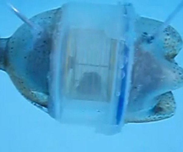 Hamster-Powered Submarine Doesn't Fire Tiny Torpedoes (But it Should)