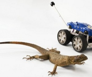 New Robot Design Gets Lizard Tail
