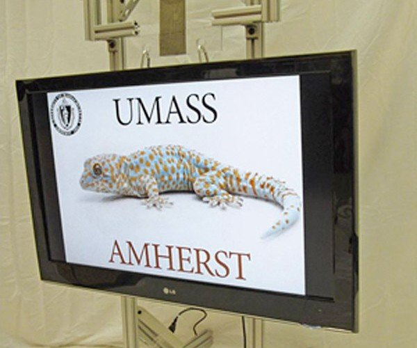 Researchers Develop Strong, Removable Adhesive Based on Gecko Feet