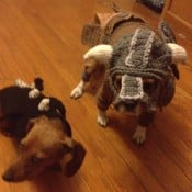 skyrim dog costumes by alicia scantlin 175x175