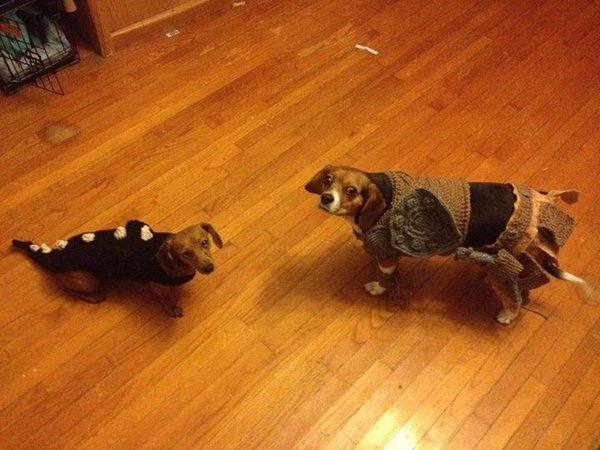skyrim dog costumes by alicia scantlin 2