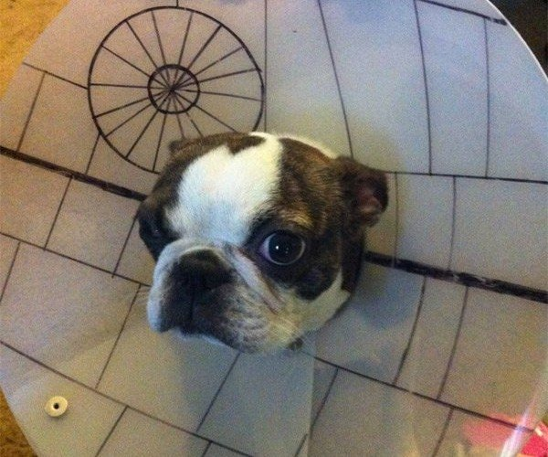 Death Star Dog Cone: I Have a Very Bad Feeling About This