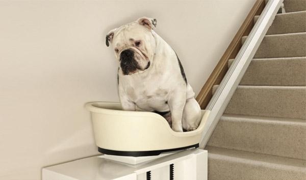 pet_lift_fat_dog