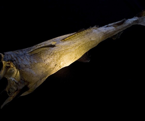 uggi lights cod fish lamps 2