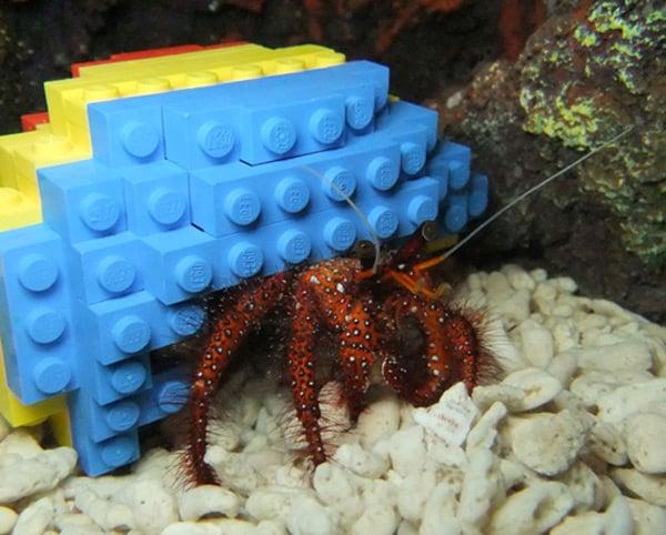 hermit-crab-lego-shell-legoland