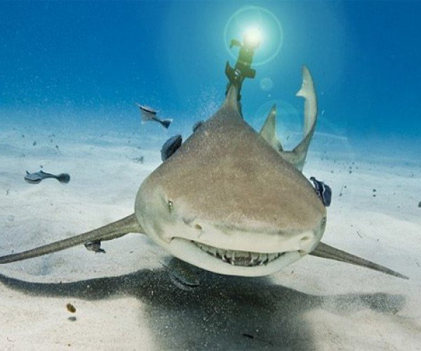 Shark Gets Outfitted with (Frickin') Laser Beam