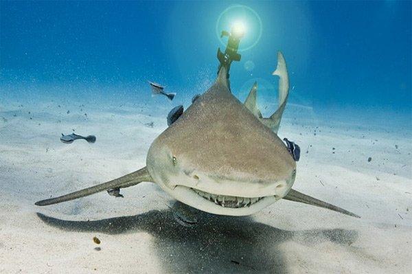 laser shark