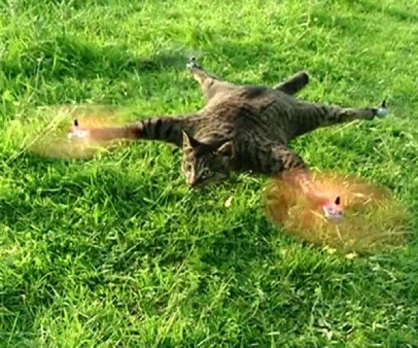 Taxidermy Cat Quadcopter is Weirder Than Nyan Cat