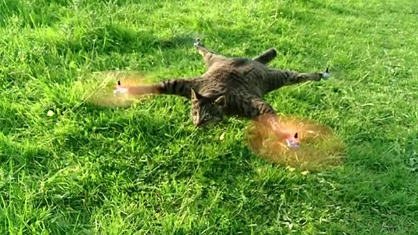 orville taxidermy cat quadcopter