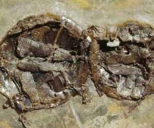 Ancient Turtles Died Getting Their Freak on