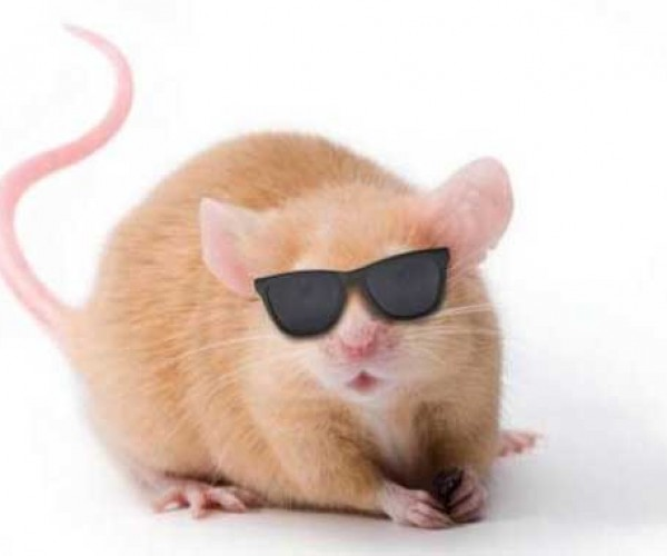 Neuroscientist Invents Technology to Cure Blind Mice (and Maybe Humans)
