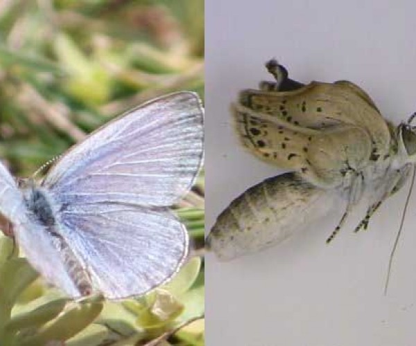 Butterflies Near Fukushima Showing Serious Radiation Related Mutations