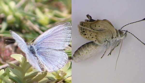 butterfly fuku