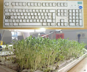 Filthy Keyboard Transformed into Ch-Ch-Chia-Keyboard