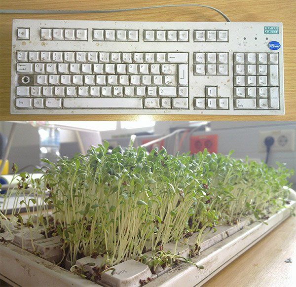 how to grow chia seeds in a keyboard