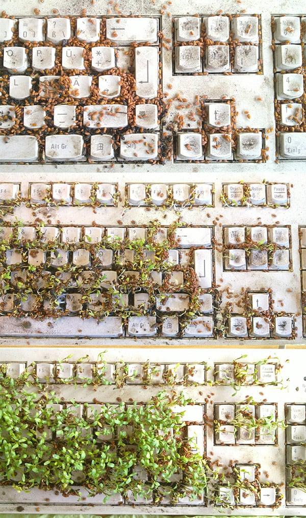 garden_keyboard_2