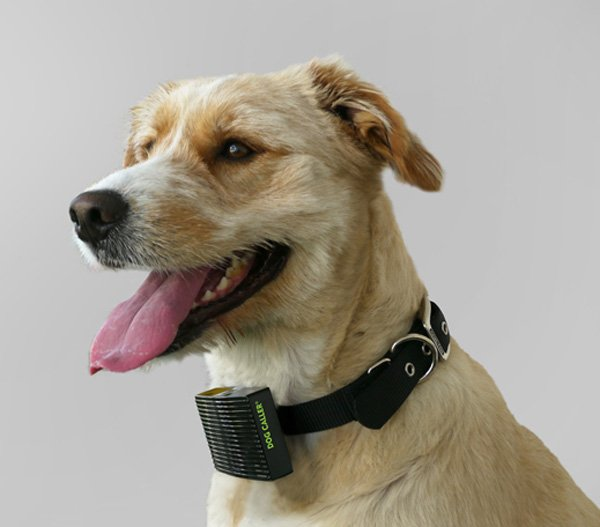 rethink toronto dog caller heat sensing collar on dog