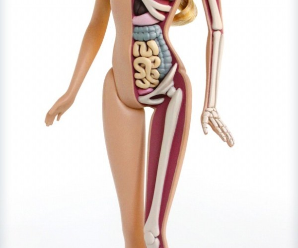 Anatomical Barbie Looks Cool But Might Freak Your Kids Out