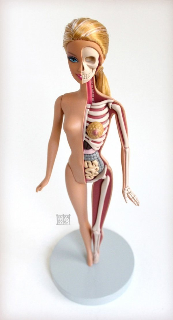 Anatomical Barbie1