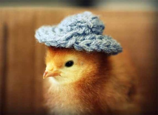 Chicks in Hats2