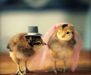 Chicks in Hats3 300x250