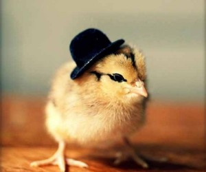 Chicks in Hats4 300x250