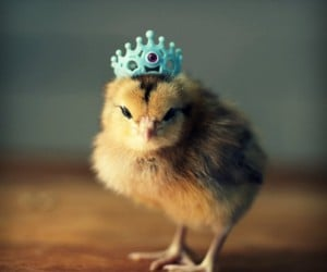 Chicks in Hats9a 300x250