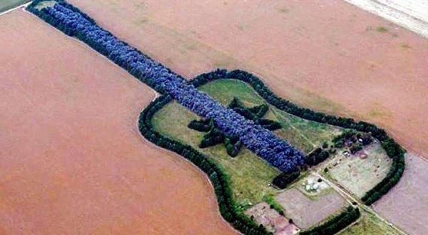 Guitar-Shaped Forest