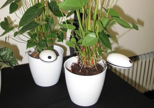 WiFi Plant Sensor