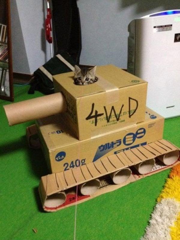 kitten tank