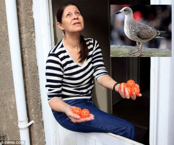 Seagulls Torment Woman By Dropping Plastic Golf Balls on Her House